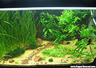 Aquascape low cost